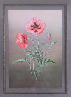 Paul Jones Papaver Orientalis Red Poppy 1976 - 1559006
