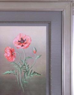 Paul Jones Papaver Orientalis Red Poppy 1976 - 1559007