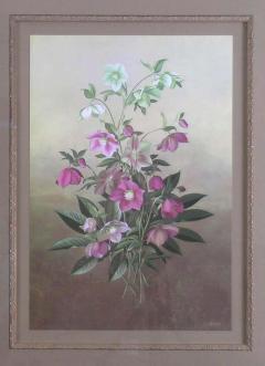 Paul Jones Paul Jones b 1921 Helleborus Orientalis Lenten Rose 1976 - 1558924