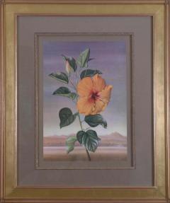 Paul Jones Paul Jones b 1921 Hibiscus Chinese Rose 1971 - 1558672