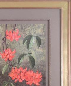 Paul Jones Paul Jones b 1921 Mucuna Bennetti Jade Vine Red New Guinea Creeper 1976 - 1558943