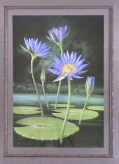 Paul Jones Paul Jones b 1921 Nymphaea Capensis Water Lily 1971 - 1558959