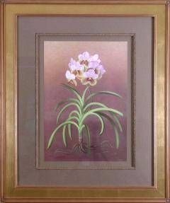 Paul Jones Paul Jones b 1921 Vanda Sanderiana Whaling Whaling Orchid 1976 - 1558957