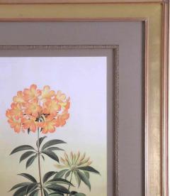 Paul Jones Rhododendron Aurigeranum 1976 - 1558992
