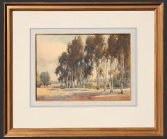 Percy Gray Stand of Eucalyptus Trees - 1251714