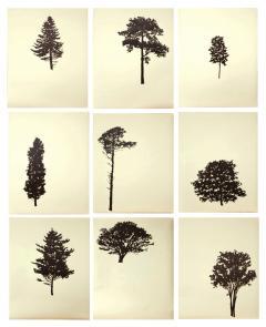 Peter Hoffer Der Wald portfolio of 9 4 of 12 - 1312142