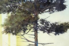 Peter Hoffer Pine Tree with Shadow - 1170305