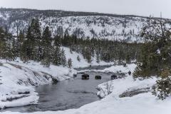 Peter Vanderwarker Bison Crossing Firehole River - 997841