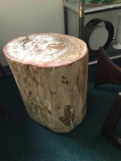 Petrified wood - 1225236