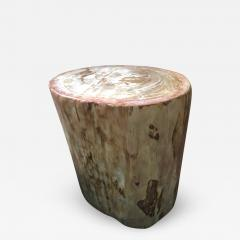 Petrified wood - 1225912
