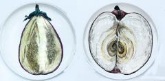 Piero Fornasetti Piero Fornasetti Pair of Sezioni Di Frutta Eggplant Apple Plates Nos 6 7  - 1614331