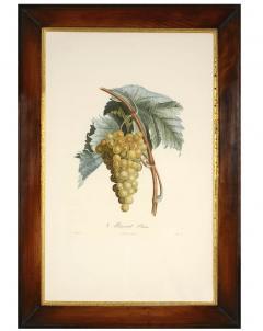 Pierre Antoine Poiteau Trait des arbres fruitiers A Set of Four Grapes  - 790620
