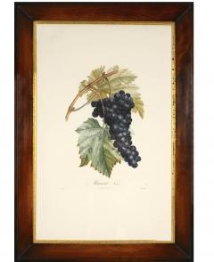 Pierre Antoine Poiteau Trait des arbres fruitiers A Set of Four Grapes  - 790621