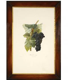 Pierre Antoine Poiteau Trait des arbres fruitiers A Set of Four Grapes  - 790622