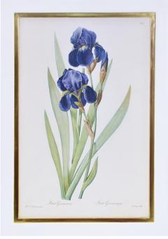 Pierre Joseph Redoute Redoute Set of Twelve Irises stipple engraved and finished by hands - 1067275