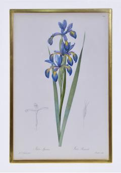 Pierre Joseph Redoute Redoute Set of Twelve Irises stipple engraved and finished by hands - 1067276