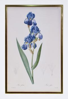 Pierre Joseph Redoute Redoute Set of Twelve Irises stipple engraved and finished by hands - 1067277