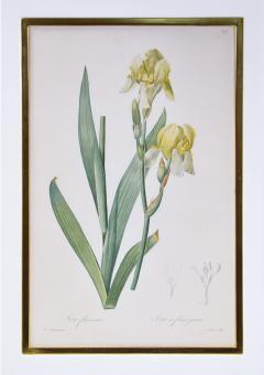 Pierre Joseph Redoute Redoute Set of Twelve Irises stipple engraved and finished by hands - 1067280