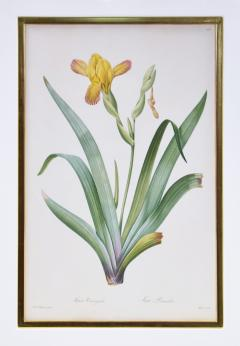 Pierre Joseph Redoute Redoute Set of Twelve Irises stipple engraved and finished by hands - 1067281