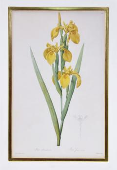 Pierre Joseph Redoute Redoute Set of Twelve Irises stipple engraved and finished by hands - 1067282
