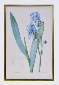 Pierre Joseph Redoute Redoute Set of Twelve Irises stipple engraved and finished by hands - 1067285