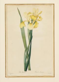 Pierre Joseph Redoute Set of Four Botanical Prints by Pierre Joseph Redoute - 1945324