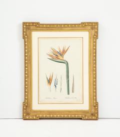 Pierre Joseph Redoute Set of Four Botanical Prints by Pierre Joseph Redoute - 1945331