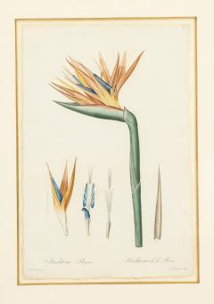 Pierre Joseph Redoute Set of Four Botanical Prints by Pierre Joseph Redoute - 1945332