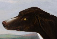 Portrait of the Sporting hound Ruth - 1043203
