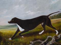 Portrait of the Sporting hound Ruth - 1043881