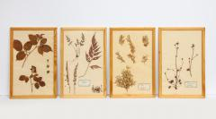 Pressed Botanicals Specimens - 1023207