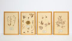 Pressed Botanicals Specimens - 1023208