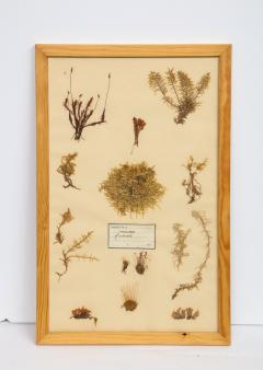 Pressed Botanicals Specimens - 1023209