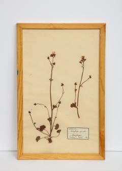 Pressed Botanicals Specimens - 1023210