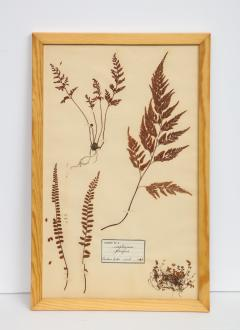 Pressed Botanicals Specimens - 1023212