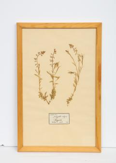Pressed Botanicals Specimens - 1023215