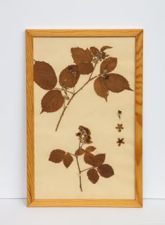 Pressed Botanicals Specimens - 1023216