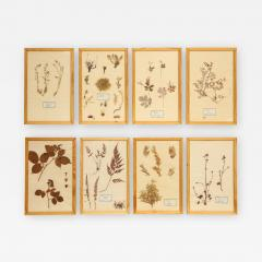 Pressed Botanicals Specimens - 1026005