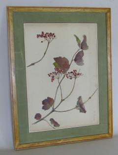 Rare Set of Floral Watercolors by Accard - 519599