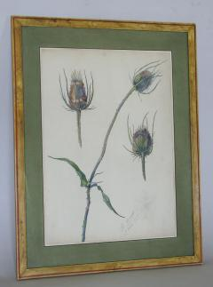 Rare Set of Floral Watercolors by Accard - 519603
