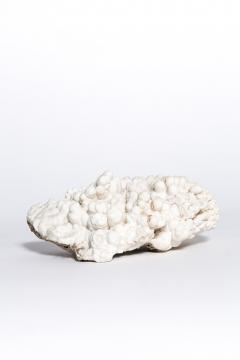Rare great white coral - 2111714