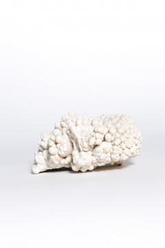 Rare great white coral - 2111715