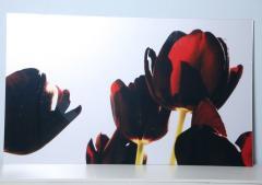 Renato Freitas Renato Freitas Black Tulips Original Photography - 348452