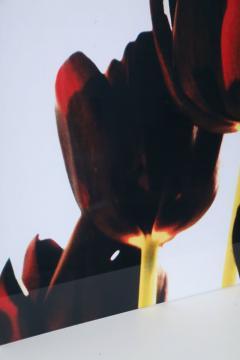 Renato Freitas Renato Freitas Black Tulips Original Photography - 348454