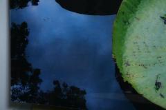 Renato Freitas Renato Freitas Water Lilies Original Photography - 364790