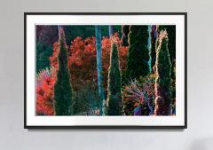 Robert Funk Tropical Colorful Foliage Trees Flaunt Brilliant Color Crimson leaves - 1689388