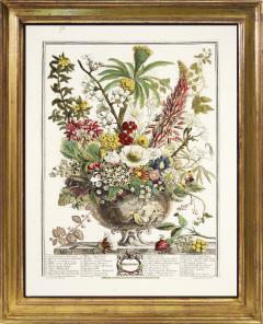 Robert Furber Twelve Months of Flowers - 1202540