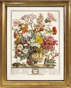 Robert Furber Twelve Months of Flowers - 1202542