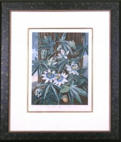 Robert John Thornton Dr Robert John Thornton The Blue Passion Flower 1800 - 1548214