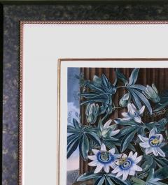Robert John Thornton Dr Robert John Thornton The Blue Passion Flower 1800 - 1548230